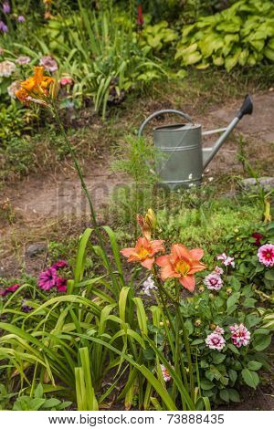 Bed Of Daylilies And Dwarfed Dahlias