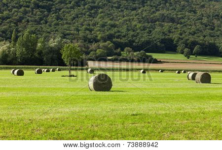 landscape, green field with woods background