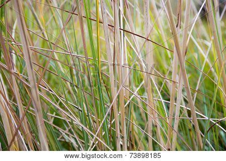 Natural Green Reeds Texture Background