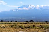 stock photo of kilimanjaro  - Amboseli National Park and Mount Kilimanjaro in Kenya
