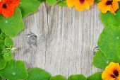 stock photo of nasturtium  - Summer background border decoration of nasturtium leaves and nasturtium flowers over wooden background - JPG