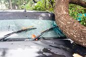 foto of hurricane wind  - tree on a car after hurricane (damaged car) ** Note: Visible grain at 100%, best at smaller sizes - JPG