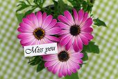 pic of miss you  - Miss you card with pink gerbera daisies