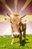 stock photo of macedonia  - Cow with flag on background series  - JPG