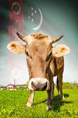 stock photo of turkmenistan  - Cow with flag on background series  - JPG