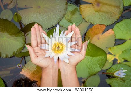 Woman holding lotus flower waterlily