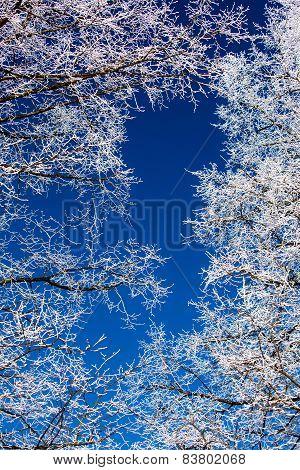 Hoarfrost on tree