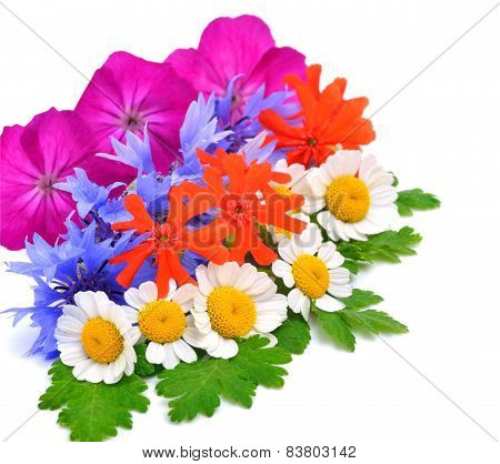 Beautiful Wildflowers, Chamomiles, Chrysanthemums, Petunia Isolated On White