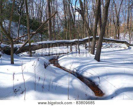 Deciduous forest in Virgina