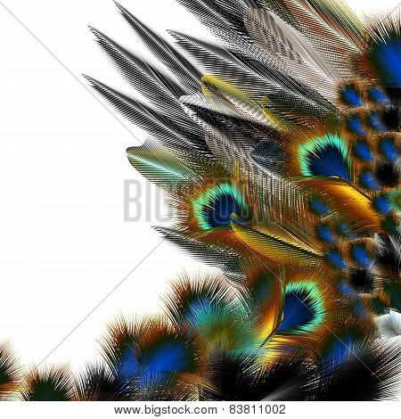 Fashion Pattern With Colorful Feathers