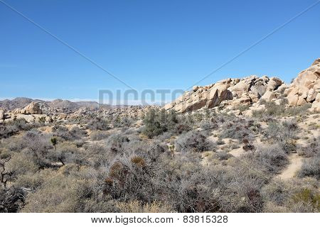 Joshua Tree And San Gorgonio
