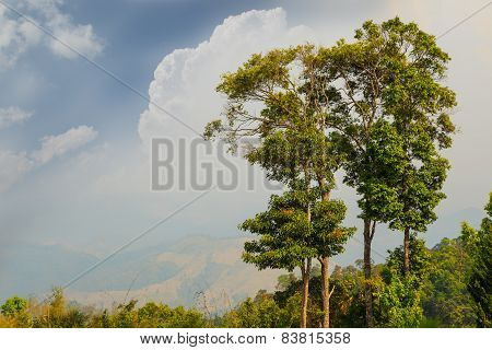 Trees On High Mountain And Sky