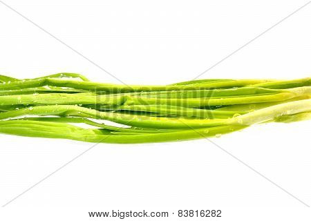 Bunch Of Fresh Green Onions