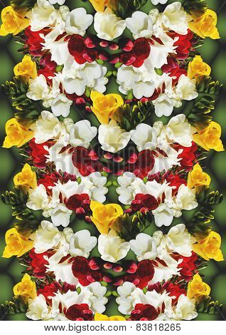 Background of different color flowers freesia
