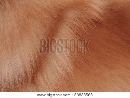 Textured Dog Brown Hair Background, Animal Fur