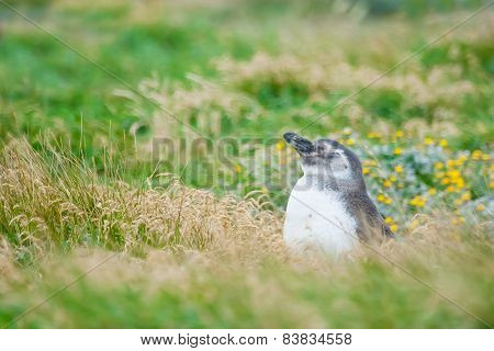 Penguin In High Grass On Meadow
