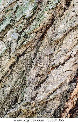 Old Tree Bark