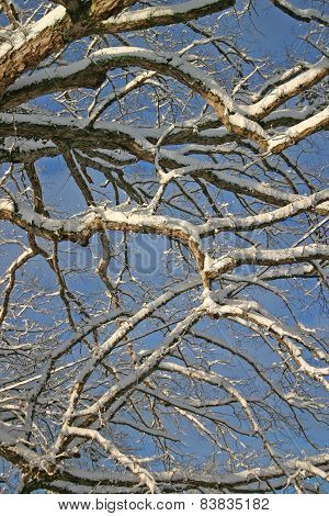 Branches and Blue Sky