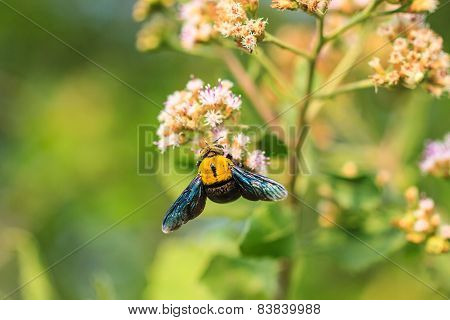 Bumble bee sitting on wild flower