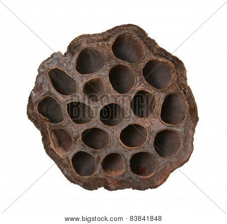Dried Lotus Seed Head