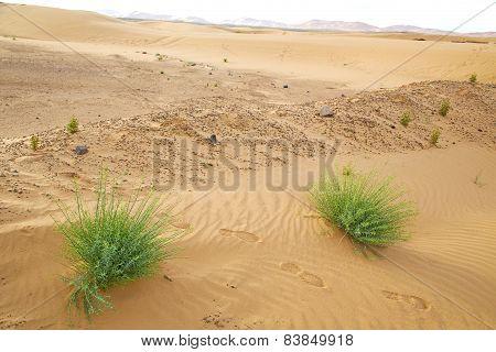 In The  Desert Oasi Morocco Sahara Africa Dune