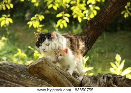 Mother Cat Climbing Cat With Her Kitten