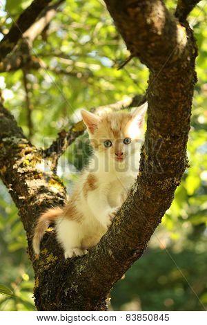Cute Small Kitten Climbing Tree Branch In Summer