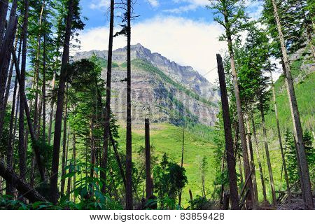 View Of The Mountains Through The Conifer Trees Along The Avalanche Lake Trail In Glacier National P