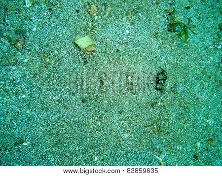 Angler Flatfish