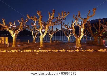 Ascona (switzerland) - Illuminated Trees