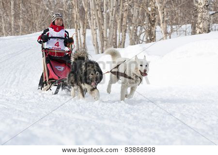 Kamchatka Kids Sled Dog Racing