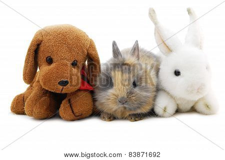 Small Rabbit And Toys