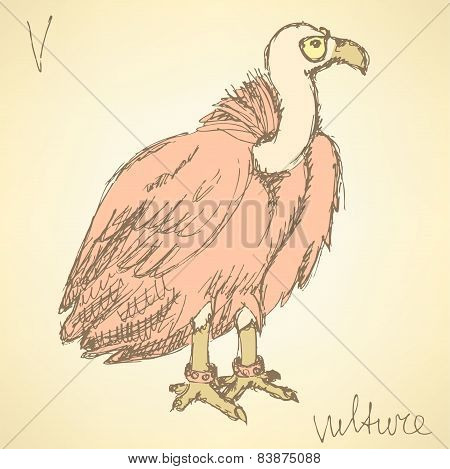 Sketch Fancy Vulture In Vintage Style