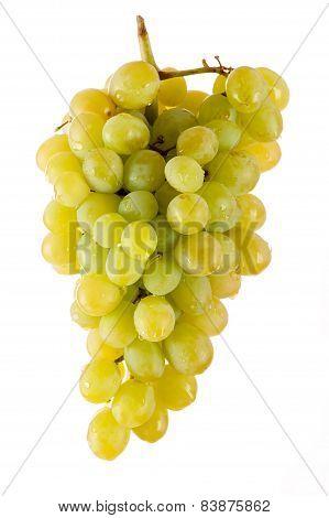 beautiful bunch of green grapes