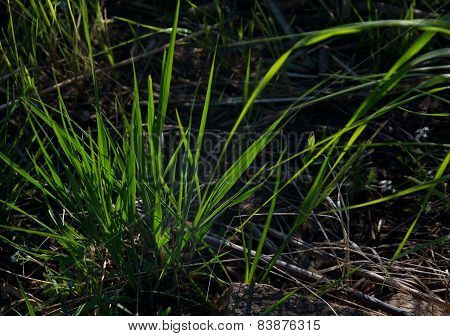Tuft of green grass