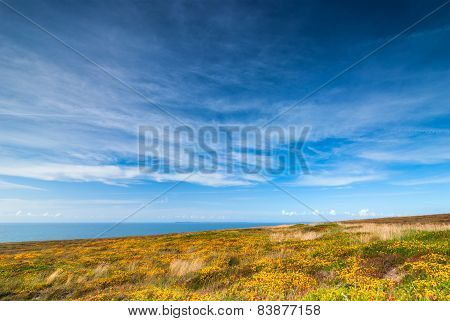 Colorful Meadow And Blue Sky