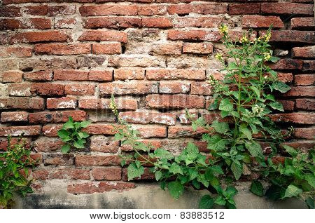 Shrubs with old brick wall background