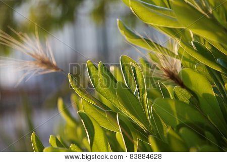 Lush Verdure