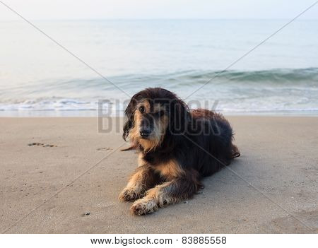 Sad And Poor Dog Lying On Sea Beach With Sorrow Face