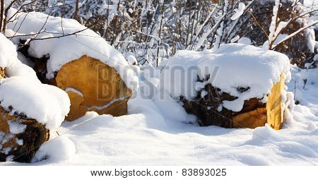 Snowy Forest In The Sunshine And Firewood