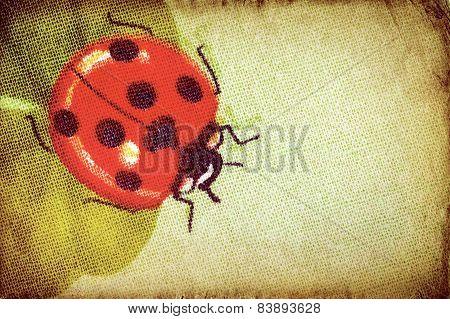 Vintage ladybug on the clover leaf