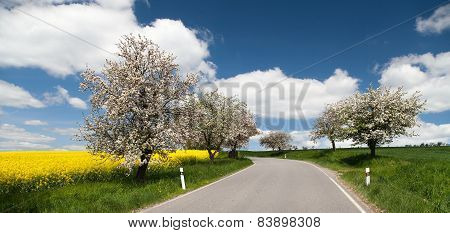 Road With Alley Of Apple Tree And Rapeseed Field