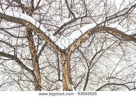 Winter Landscape. Pine Branch Tree Under Snow.