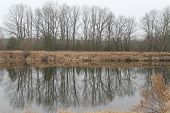 picture of paysage  - group of trees grow on the bank of the river and reflection in crystal water - JPG