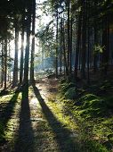 pic of bohemia  - view of the forest landscape - JPG