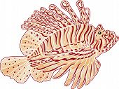 picture of dragon-fish  - Decorative Isolated Poison Lion Fish on white background - JPG
