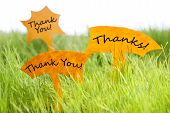 image of thankful  - Three Labels With English Text Thank You And Thanks On Sunny Green Grass For Spring Or Summer Feeling - JPG