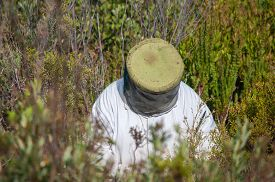 stock photo of fynbos  - Beekeeper at work between fynbos plants near Sir Lowrys Pass in the Western Cape Province of South Africa - JPG