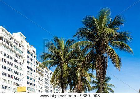 Palm trees in Copacabana beach in Rio de Janeiro, Brazil