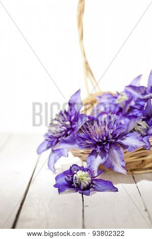 high key image of a basketful of blue clematis flowers, shallow depth of field